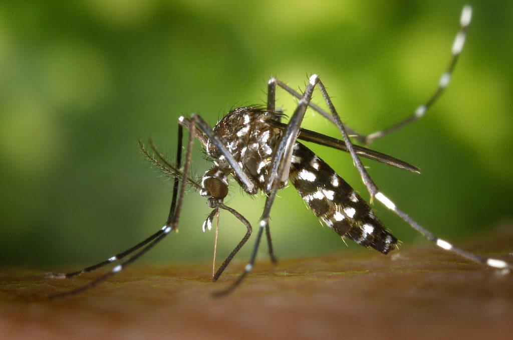 Κουνούπι κουνούπια κουνουπι κουνουπια