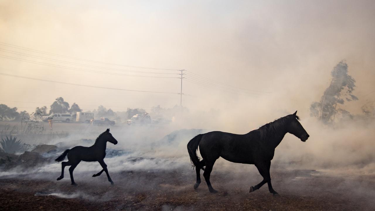 αλογα καλιφορνια φωτια