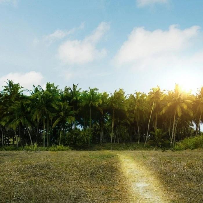Κλιματική αλλαγή: Μέχρι το τέλος του αιώνα, το καλοκαίρι θα διαρκεί έως 6 μήνες