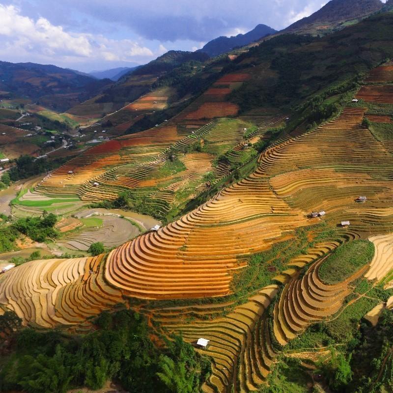 Μεγάλη νίκη για το περιβάλλον: 3 κορυφαίες επιχειρήσεις τροφίμων στρέφονται στην «πράσινη» γεωργία